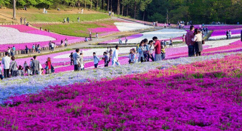parc hitsujiyama